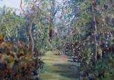 Walk in Acacia glade